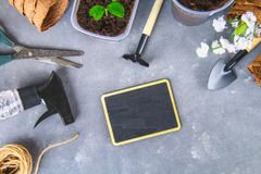 Garden tools and pots on a gray concrete background. Chalk board. Top view, copy space. Garden tools and pots on a gray concrete background. Chalk board. Top stock images
