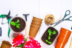 Garden tools, pots, seedlings on a white wooden table. Copy the space. Top view. Garden tools, pots, seedlings on a white wooden table. Copy the space. Top view Royalty Free Stock Photos