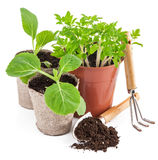 Garden tools with seedlings vegetable Royalty Free Stock Photos