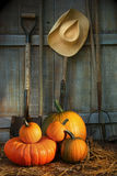 Garden tools in shed with pumpkins royalty free stock images