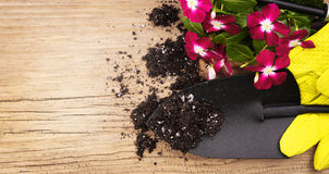 Garden tools, shovel, gloves, flowers and soil on old wood Stock Image