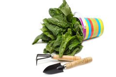 Garden tools and spinach pot Stock Photo