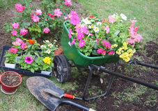 Garden tools and spring flowers. Spring flowers and garden tools on yard Stock Photo