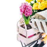 Garden tools and spring flowers Stock Photography