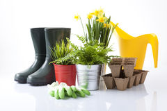 Garden tools and spring flowers Stock Image