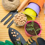 Garden tools and sprouts. Royalty Free Stock Photo
