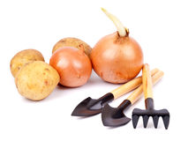 Garden tools with vegetables Stock Photography
