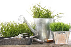 Garden tools and watering can with grass Stock Photo