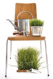 Garden tools, watering can on wood chair Royalty Free Stock Photo