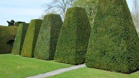 Garden Topiary. Topiary in a Formal Garden Royalty Free Stock Photo
