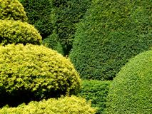 Garden: topiary hedge detail Stock Images