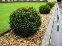 Garden: topiary hedge detail - h Royalty Free Stock Photos