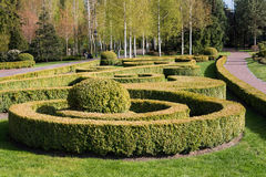 Garden with topiary landscape. Landscaping in the park Stock Photography