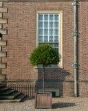 Garden: topiary mandarin tree. Topiary orange tree outside neo-classical mansion Stock Image