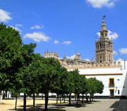 Garden & the tower, Cathedral of Seville, Spain Royalty Free Stock Photo