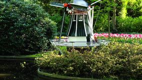 Dutch wind mills. Garden with traditional Dutch windmills and blooming flowers, Netherlands stock video
