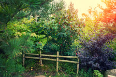 Garden in a traditional Japanese style Royalty Free Stock Photos
