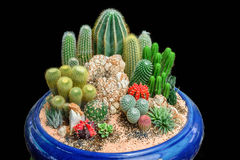 Garden tray of cactus in pot. Small garden tray of cactus in black  background Royalty Free Stock Photo