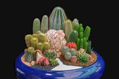 Garden tray of cactus in pot. Small garden tray of cactus in black  background Stock Images