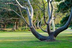 Garden tree Royalty Free Stock Photography