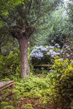 Garden with tree and flowers in summer Stock Photography