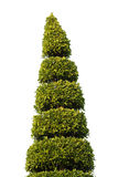 Garden Tree Isolate Royalty Free Stock Photography