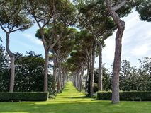 Garden and tree-lined avenue. Tree-lined avenue with maritime pines royalty free stock images