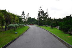 Garden. The Tree and road in the garden Royalty Free Stock Photography