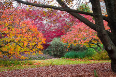Garden trees in autumn fall leaves Royalty Free Stock Images