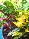 Garden trees mix of colors Royalty Free Stock Image