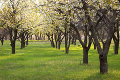 Garden trees Stock Photo