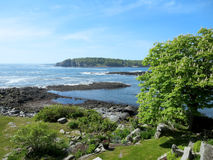 Garden of trees at Ryefield Cove on Peaks Island Royalty Free Stock Images