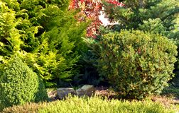 Garden with trees and shrubs. Garden landscape front view with trees and shrubs Royalty Free Stock Image