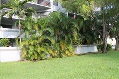 Garden trees at suburban condo building. Garden lawn trees and apartment condo building exterior. south Florida summer day. outdoors, natural light Stock Photo