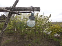 Garden, trees, vegetation,Lighting, lantern, flowering trees,homestead farming,lamp stock photos