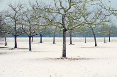 Garden trees in winter Royalty Free Stock Photography