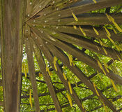 Garden Trellis Stock Photos