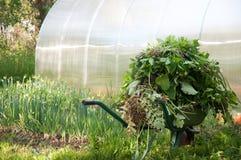 Garden trolley weeds grass plants stock photo