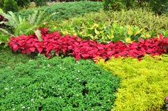 Garden of Tropical Plants Royalty Free Stock Photos