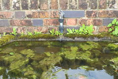 A garden trough and tap Stock Photography