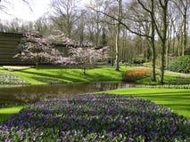 Garden tulip. Trees park river Royalty Free Stock Photo