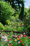 Garden with tulips Royalty Free Stock Images
