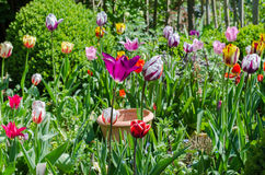 Garden with tulips Stock Image