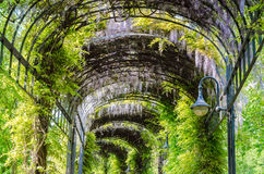 Garden Tunnel. Flowers and trees grew into a kind of garden tunnel Royalty Free Stock Image