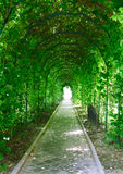 A garden tunnel Stock Image
