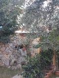 Garden in Turkey. Very beautiful traditional etno garden in Turkish house royalty free stock photo