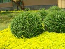 Garden in ubonratchatani university in thailand Stock Image