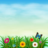 A garden under the clear blue sky with a butterfly Stock Images