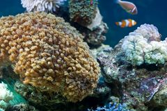 Free Garden Under The Sea Royalty Free Stock Photography - 6861047
