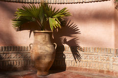 Garden urn with palm leaves. With pink wall royalty free stock image